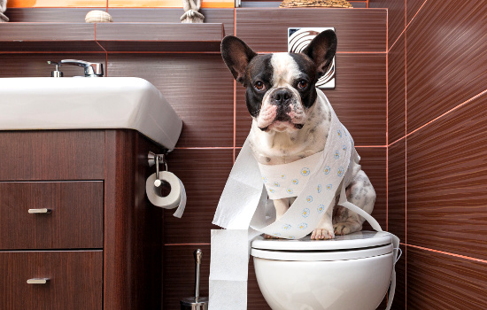 Dog on toilet © Patryk Kosmider | dollarphotoclub.com